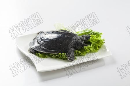 甲鱼 - 找菜图